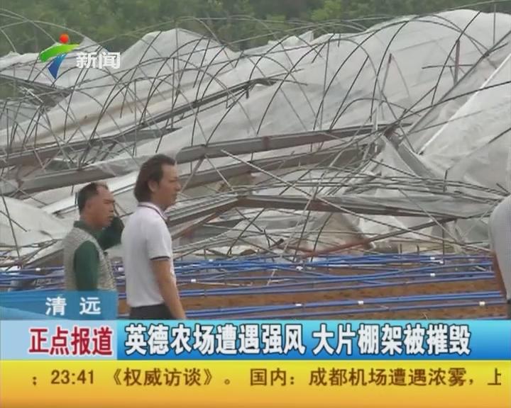 清远:英德农场遭遇强风 大片棚架被摧毁