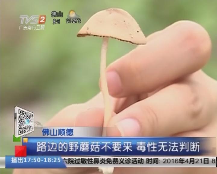 佛山顺德:路边的野蘑菇不要采 毒性无法判断
