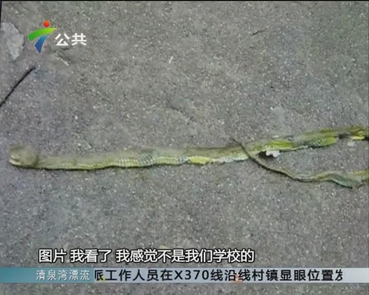 韶关:高校有蛇出没 一名女生被咬