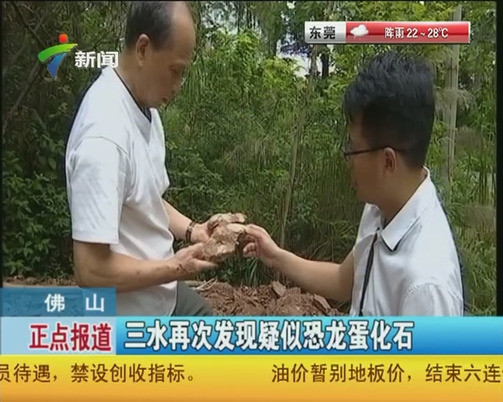 佛山:三水再次发现疑似恐龙蛋化石