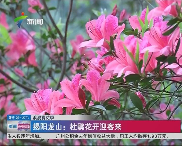 浪漫赏花季 揭阳龙山:杜鹃花开迎客来