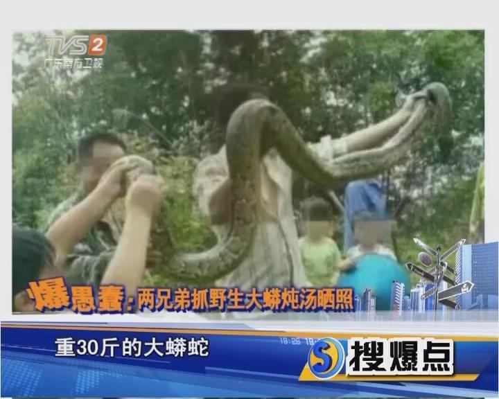 爆愚蠢:兩兄弟抓野生大蟒燉湯曬照