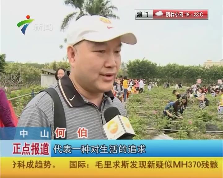 中山:小榄茶薇文化节启动 菊城四月茶薇香