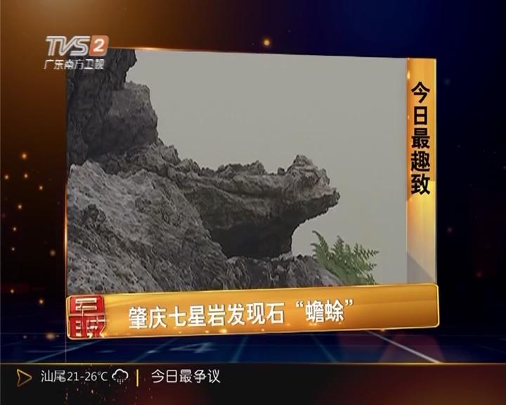 """今日最趣致:肇庆七星岩发现石""""蟾蜍"""""""