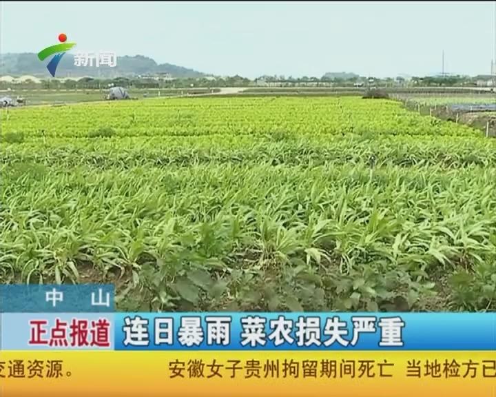 中山:连日暴雨 菜农损失严重