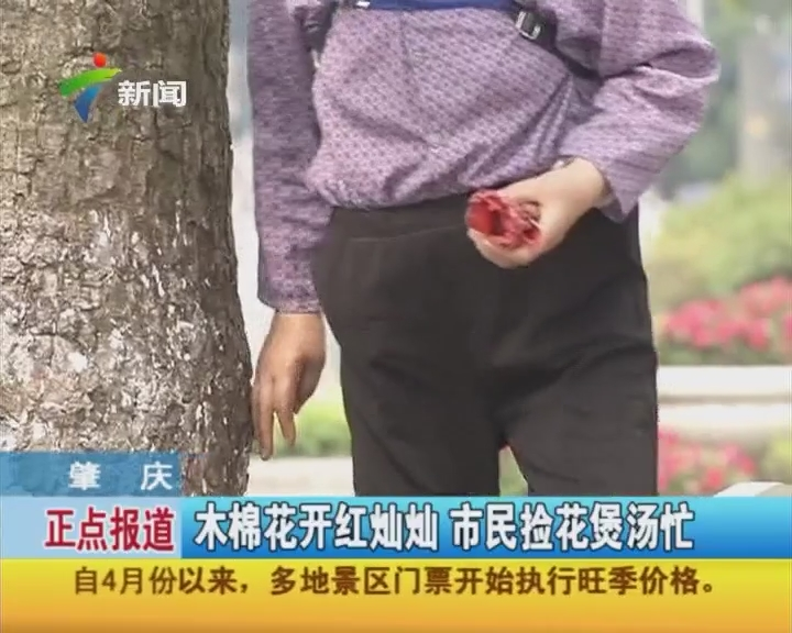 肇庆:木棉花开红灿灿 市民捡花煲汤忙