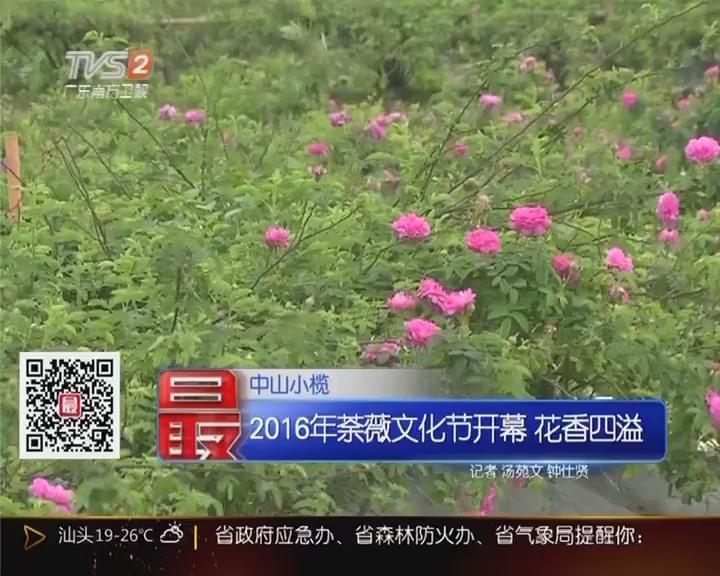 中山小榄:2016荼薇文化节开幕 花香四溢