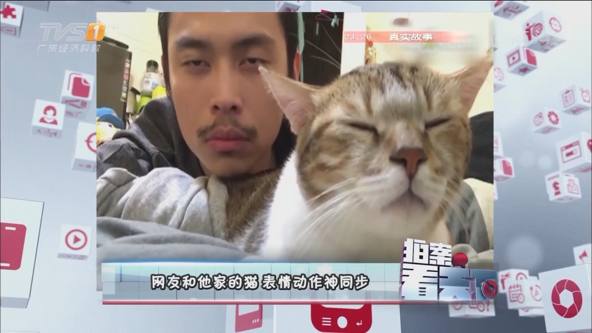 网友和他家的猫 表情动作神同步