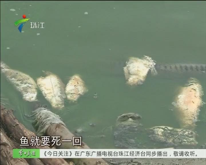 韶关:农田鱼塘受污染 猪场偷排为养鱼?