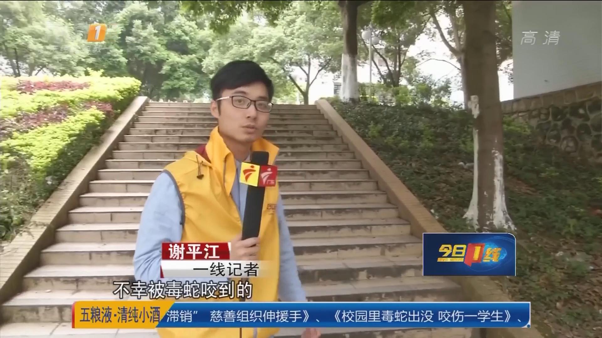 韶关学院:校园里毒蛇出没 咬伤一学生