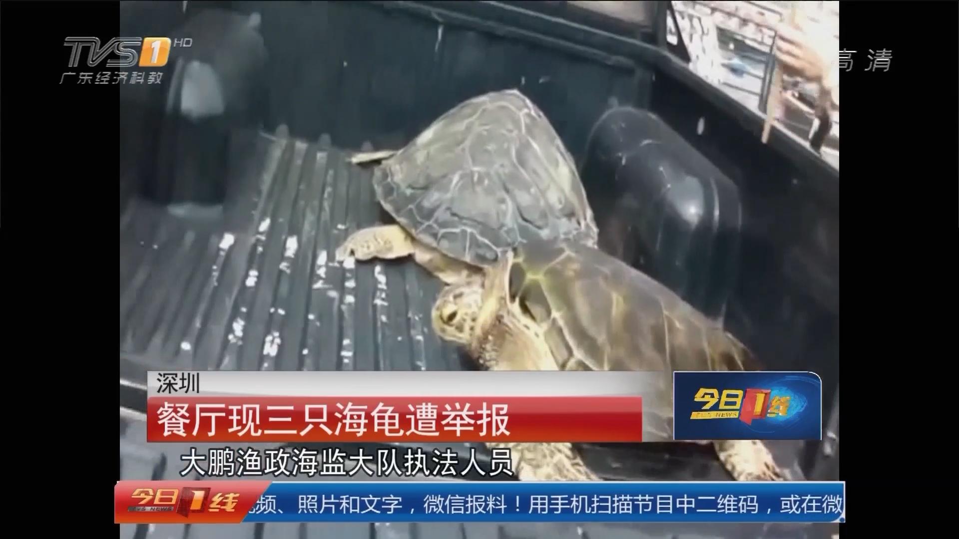 深圳:餐厅现三只海龟遭举报