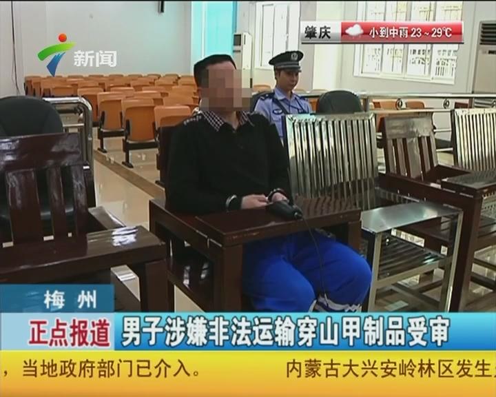 梅州:男子涉嫌非法运输穿山甲制品受审