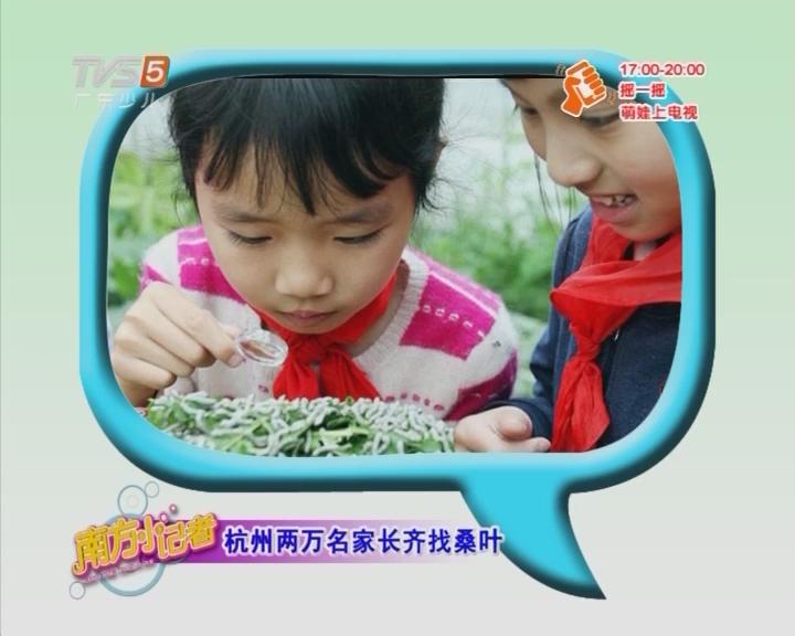 杭州两万名家长齐找桑叶