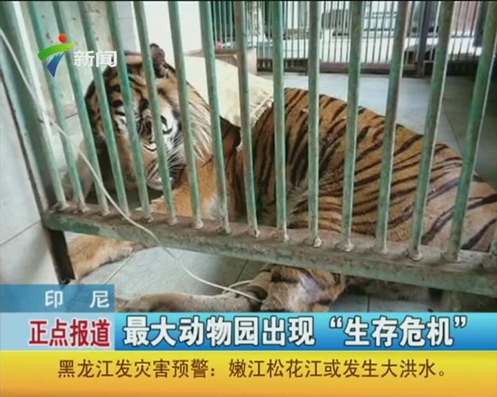 """印尼:最大动物园出现""""生存危机"""""""