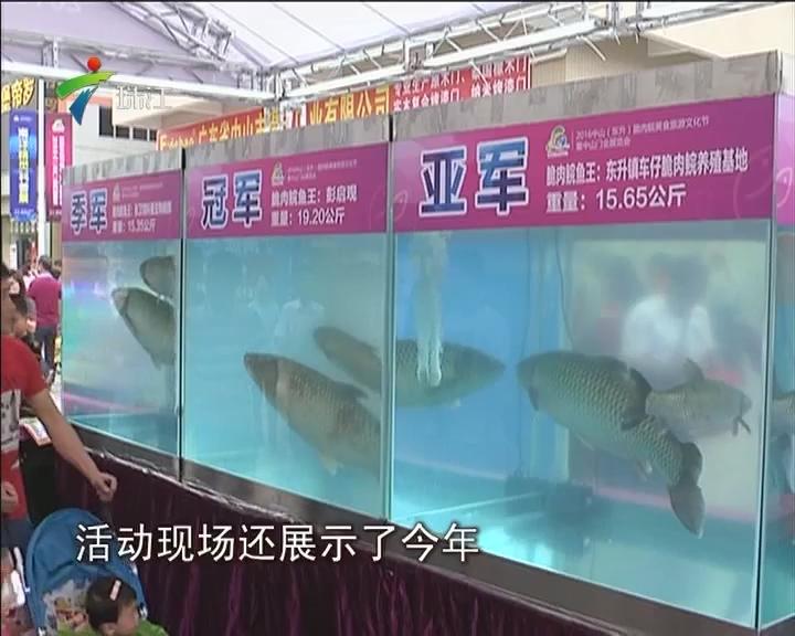 """中山:旅游文化节 """"鱼王""""来助兴"""