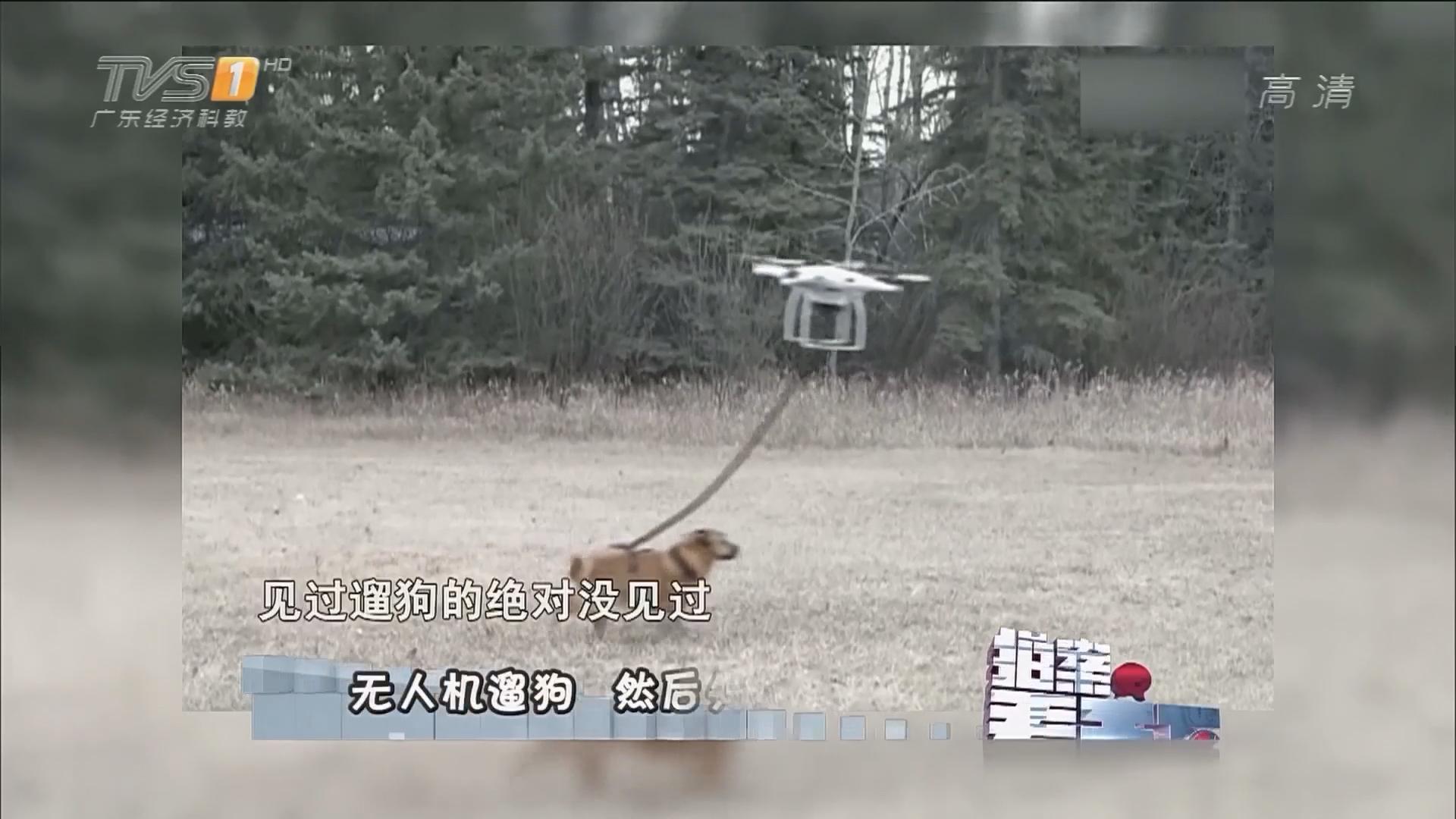 无人机遛狗 然后失控了......
