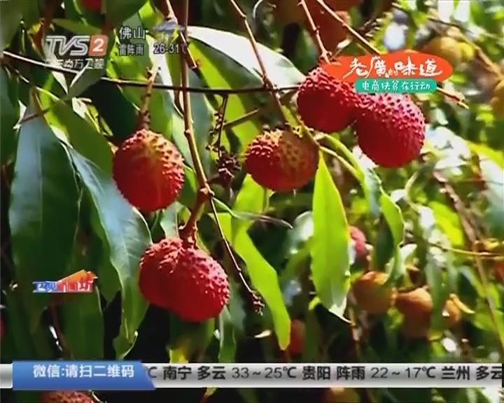 """惠州:""""混血""""荔枝树结出美味"""