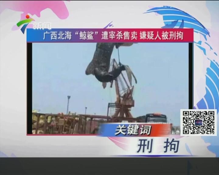 """广西北海""""鲸鲨""""遭屠杀售卖 嫌疑人被刑拘"""