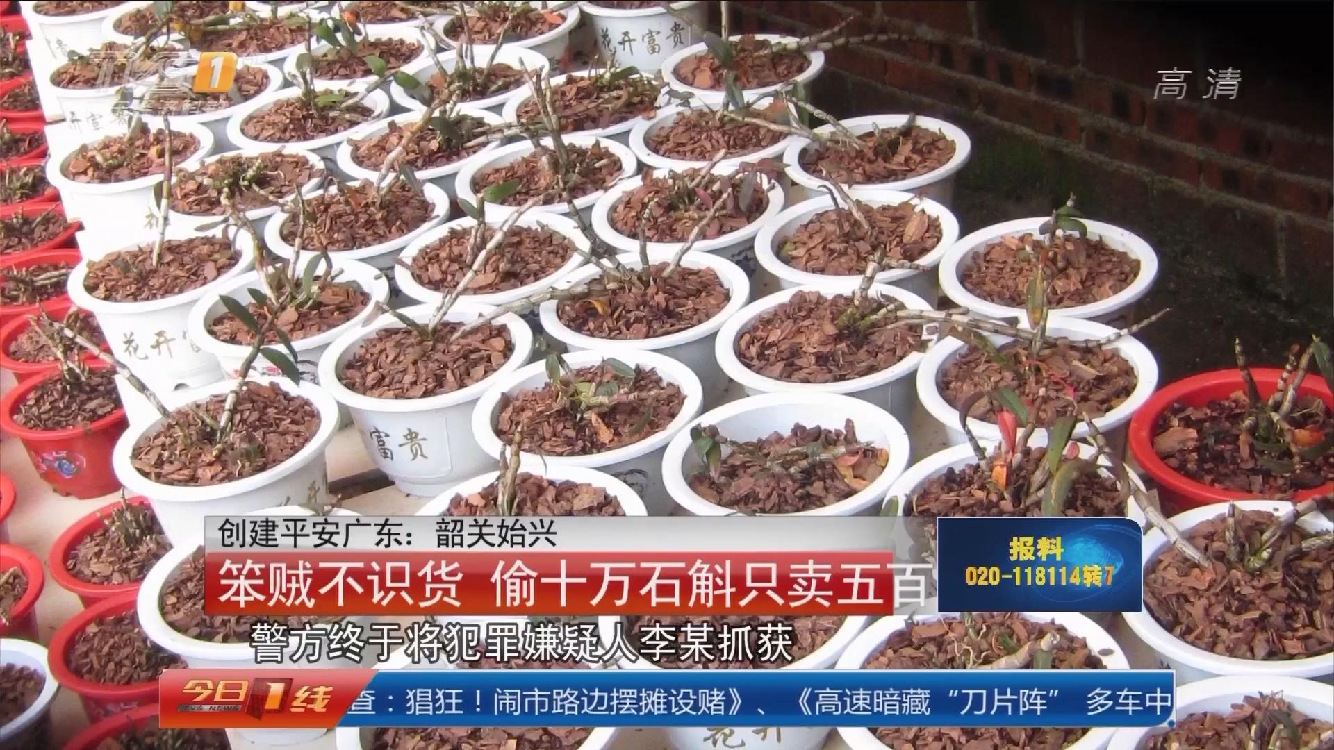 创建平安广东:韶关始兴 笨贼不识货 偷十万石斛只卖五百