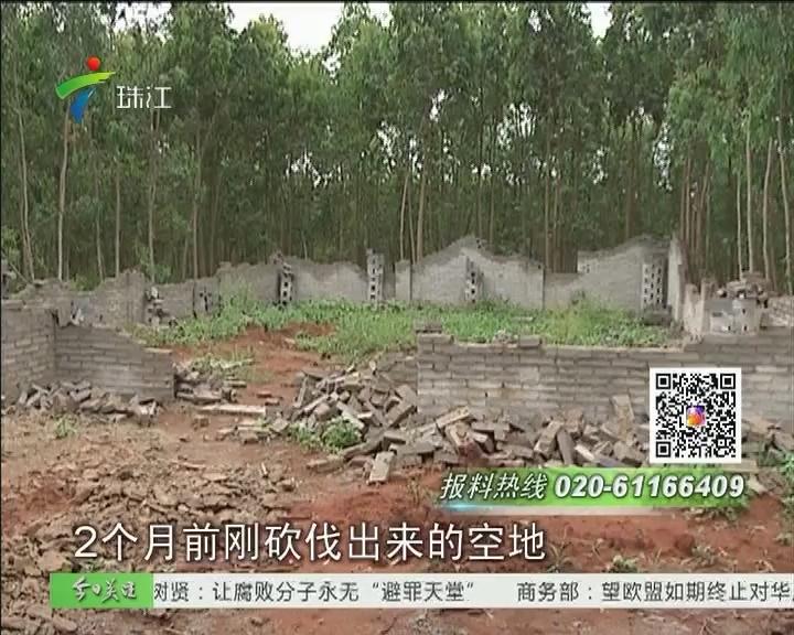 湛江:村民林地疯狂抢建 只为道路征地补偿?