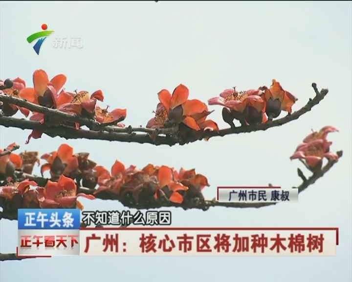 广州:核心市区将加种木棉树