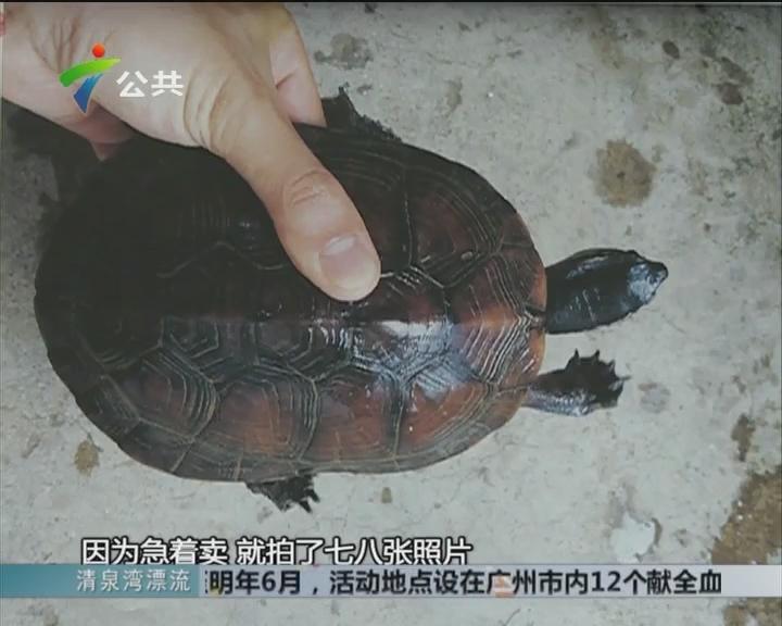 """韶关:80岁老伯 被盗走价值200万""""名龟"""""""