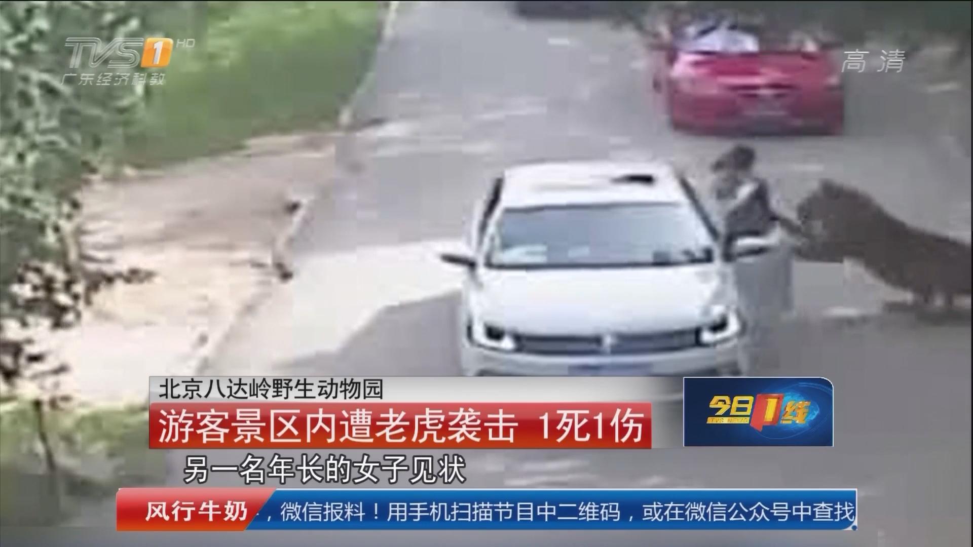 北京八达岭野生动物园:游客景区内遭老虎袭击