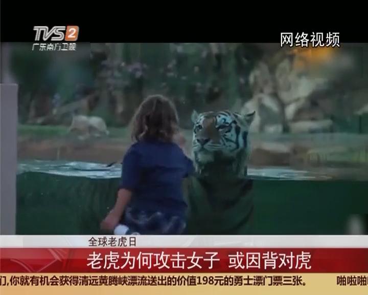 全球老虎日:老虎为何攻击女子 或因背对虎