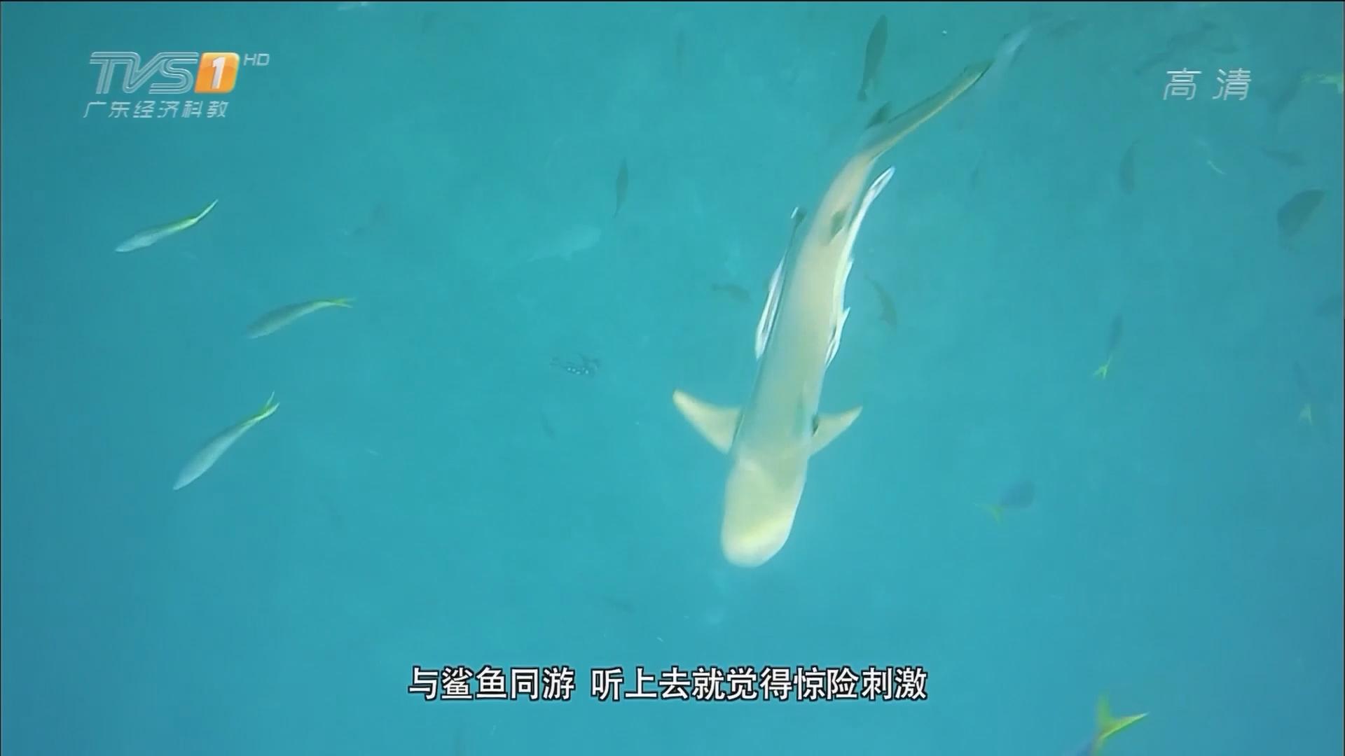 海底世界:护士鲨 百年砗磲