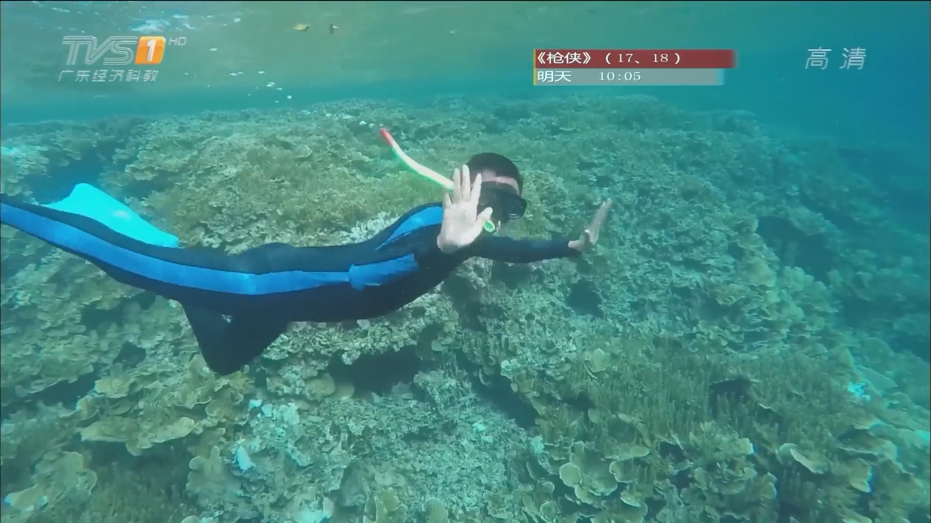 帕劳游——硬珊瑚区