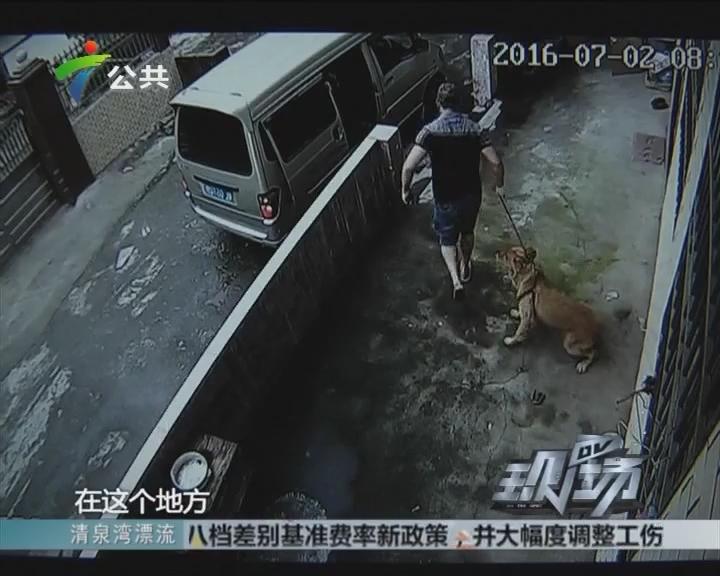 惠州:以为系自家人 原来竟是偷狗贼