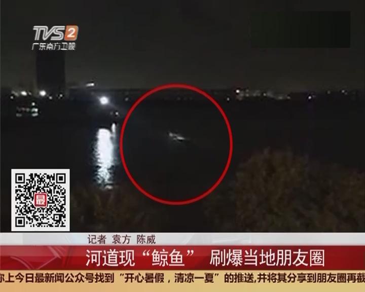 """佛山市顺德区龙江镇:河道现""""鲸鱼""""刷爆当地朋友圈"""