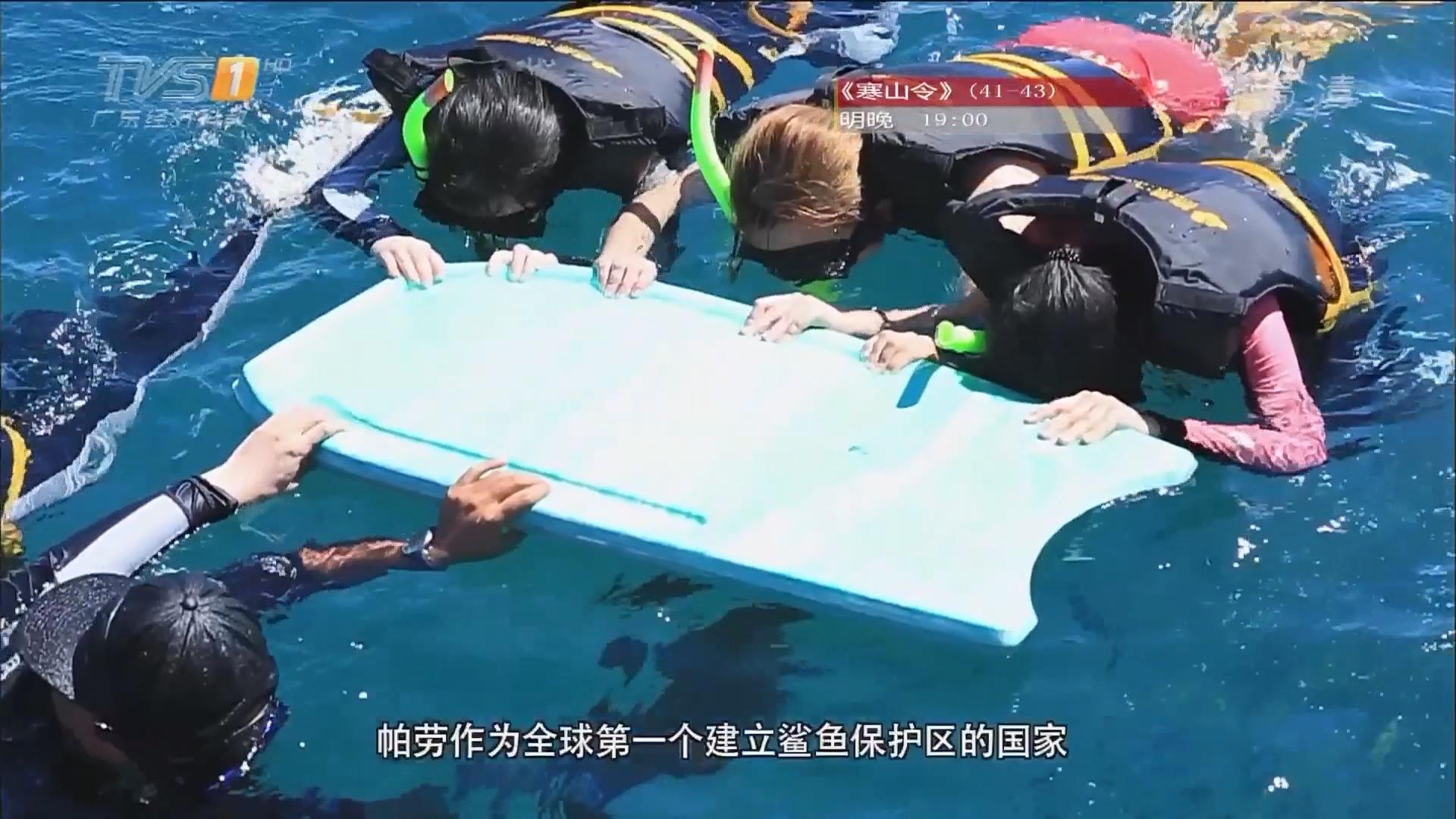 帕劳游——游览海底世界:护士鲨 百年砗磲