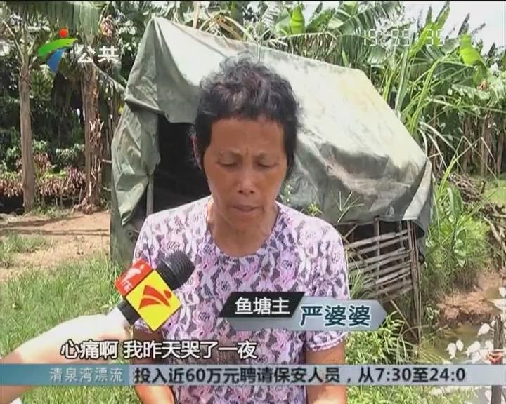 村民求助:鱼塘疑遭人投毒 一夜损失十五万