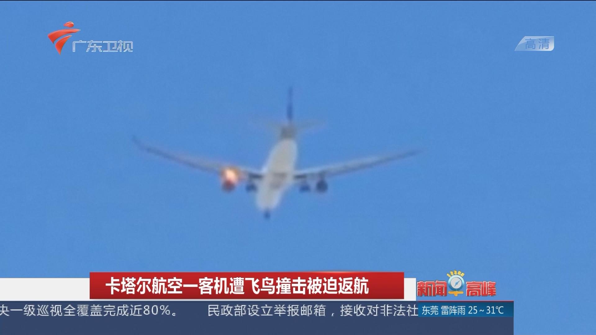 卡塔尔航空一客机遭飞鸟撞击被迫返航