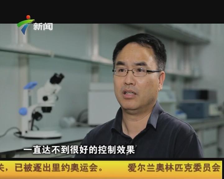 奚志勇:揭秘世界最大蚊子工厂