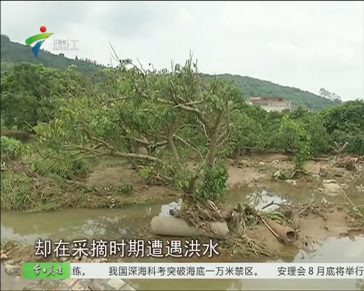 从化:暴雨致两万人受灾 果农损失惨重