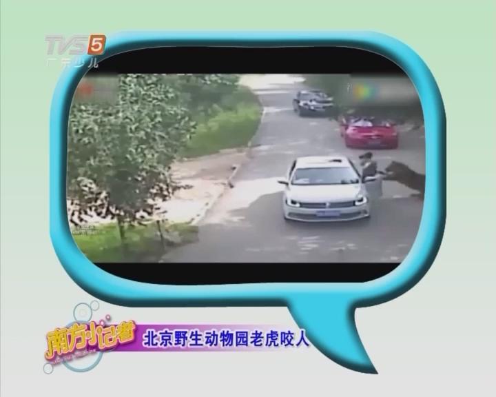北京野生动物园老虎咬人