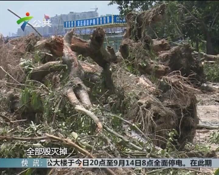 盆景协会求助:种植场被破坏 损失过百万