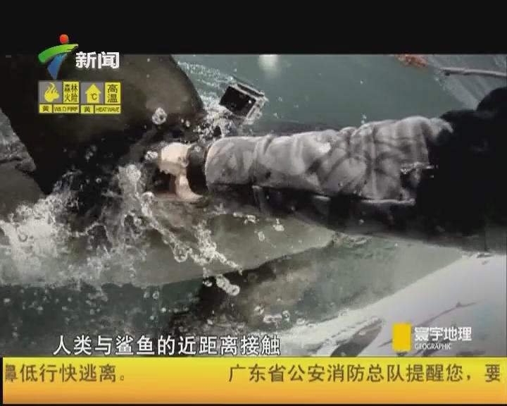 不可能的冒险 大白鲨奇袭