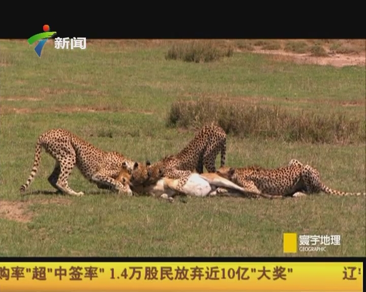 超级野生动物摄影师