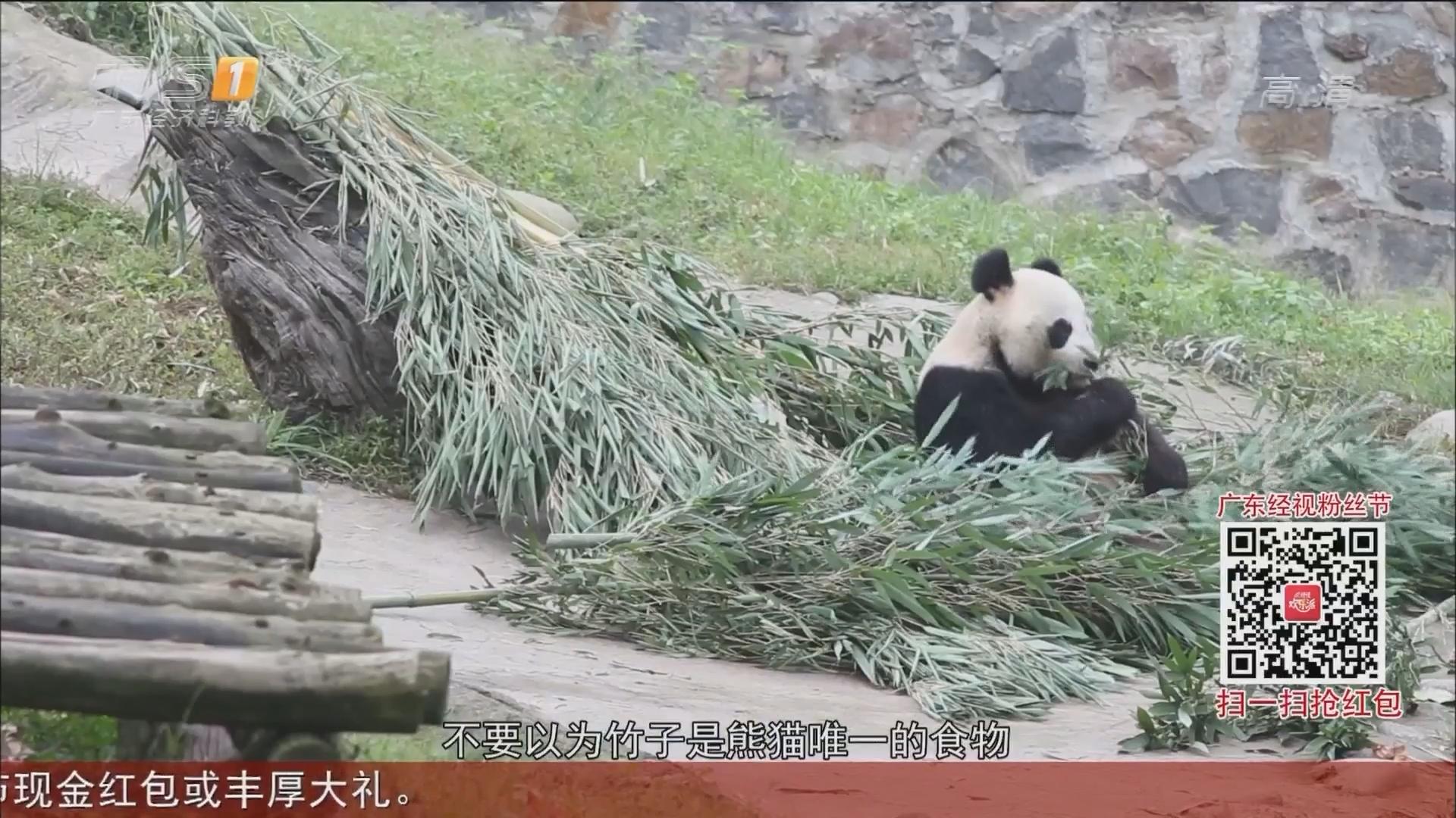 四川——都江堰大熊猫基地