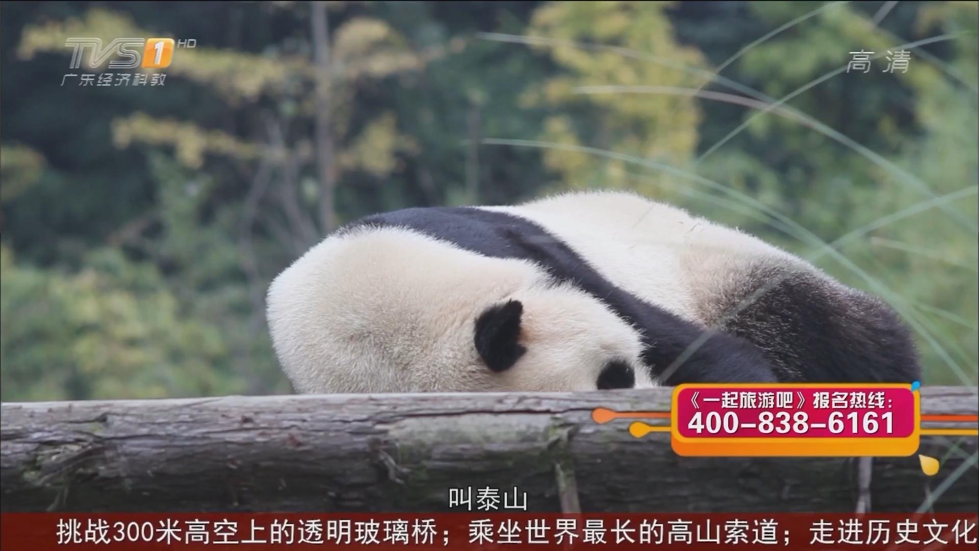 成都——参观成都熊猫基地
