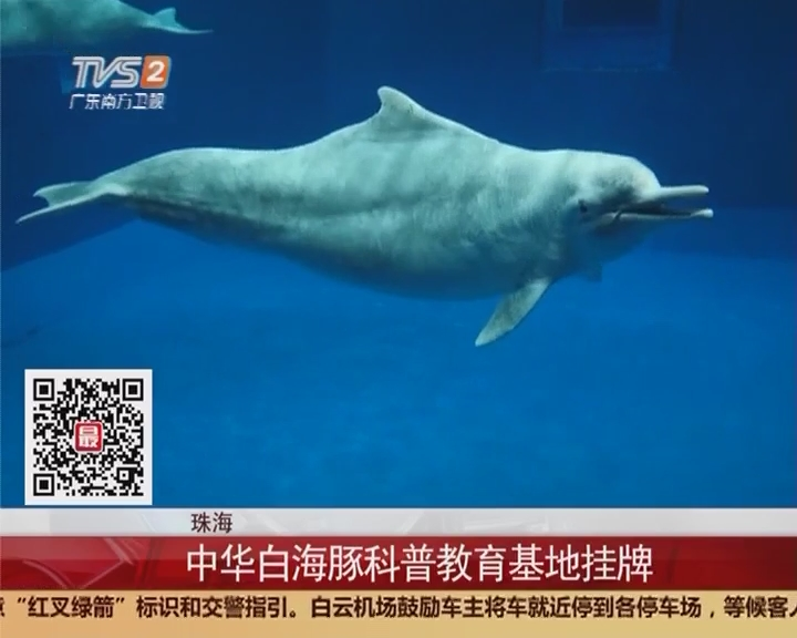 珠海:中华白海豚科普教育基地挂牌