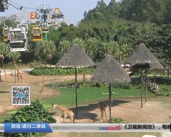 春节游园新项目 长隆动物世界:空中缆车开启全新视角