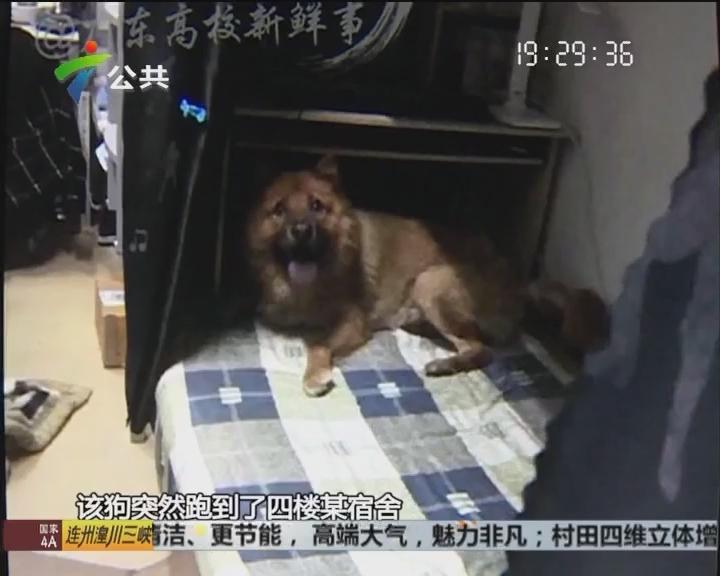 广州:流浪狗误伤学生 保安乱棍将其打死