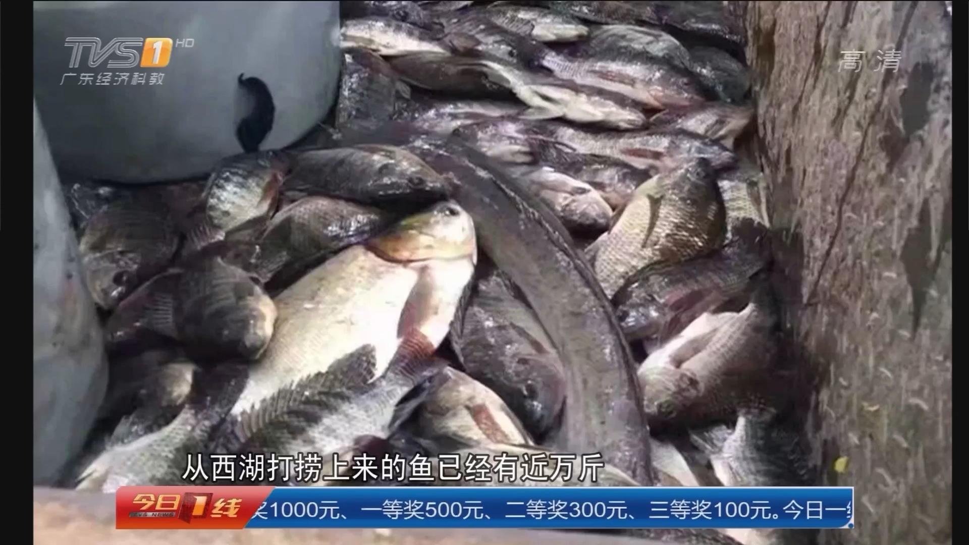 广州:天气变冷 华工捞鱼免费派送