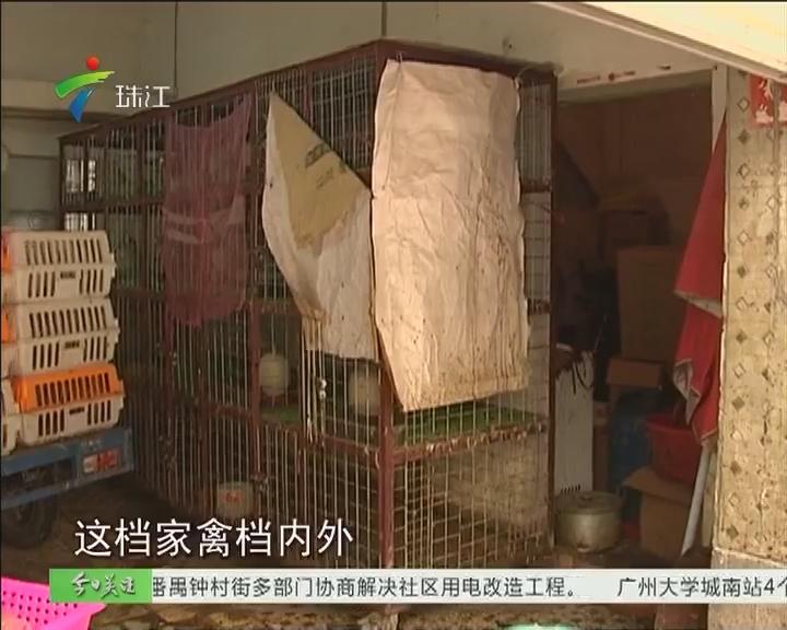广州:活禽市场休市三日 无牌活禽档竟顶风开档