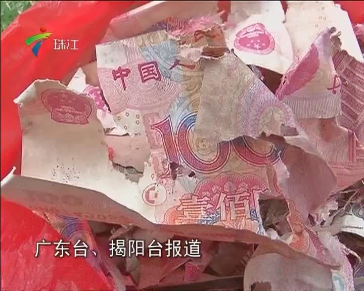 揭阳:家中老鼠作怪 万元现金被咬碎
