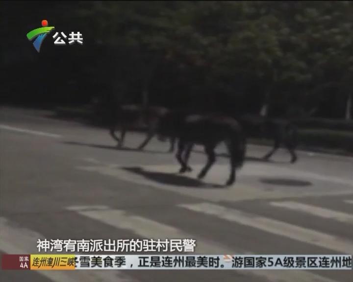 中山:疑有马匹乱逛 警方彻夜守候